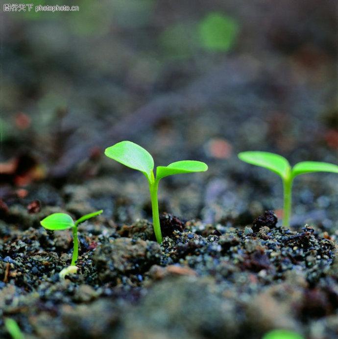 东北黑土曾经输出做肥料