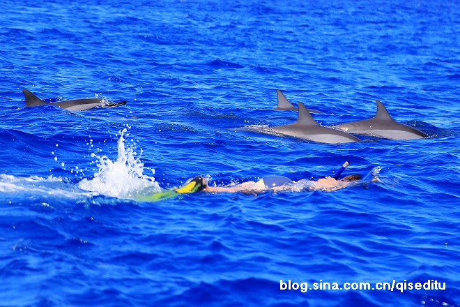 【毛里求斯】碧海蓝天,与海豚共同遨游