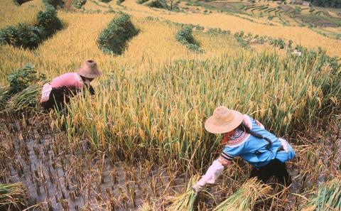 中国粮食进口:恶劣生态环境下的无奈之举