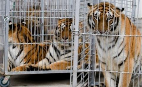 动物在驯养表演过程中致残死亡