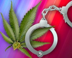 大麻的罪与非罪,美国模式VS荷兰模式