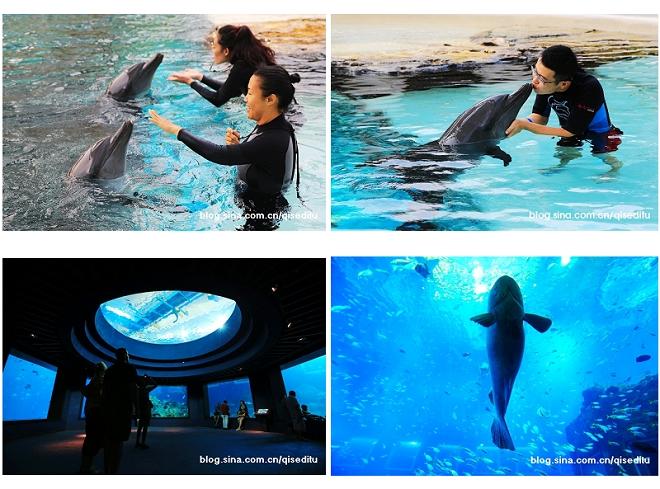 【新加坡】圣淘沙名胜世界,亲亲海豚