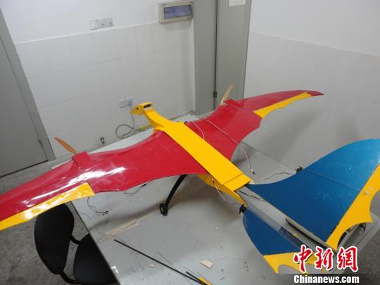 我们学生做的翼龙仿生电动飞机成功试飞