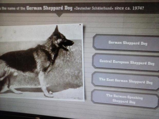 1974年之後德国牧羊犬改叫什么了?