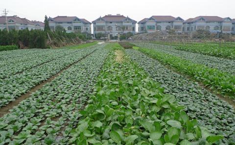 都市农业:打造更宜居的中国城市
