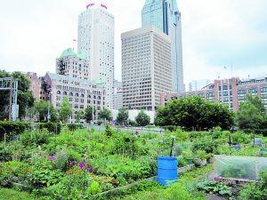 社区园圃:关于城市的另一种想象