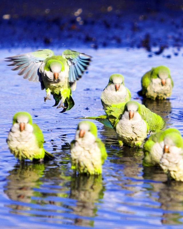鹦鹉的社交世界是什么样子的?