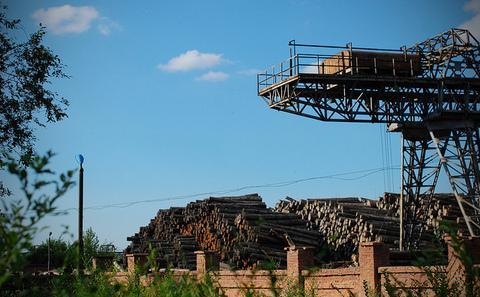 中国试点国有林全面禁伐