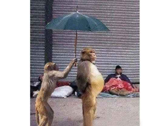"""【周末品读】吕良彪:中国官场是棵""""机关树"""",爬满着最精明的""""欲望之猴"""""""