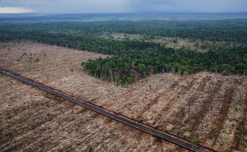 看胶合板是如何破坏了印尼的热带雨林
