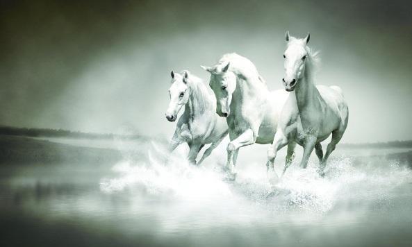 《大投行家》第六章《白马非马》