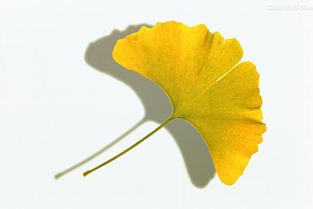 最后的秋天:悼念邹碧华法官