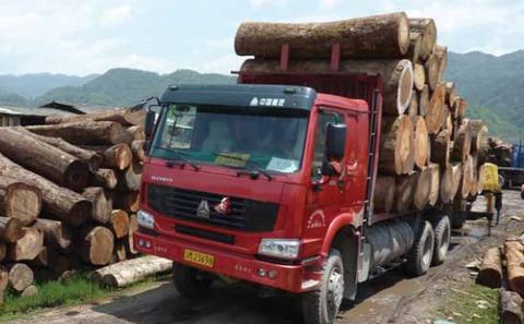 非法木材贸易在中国愈演愈烈