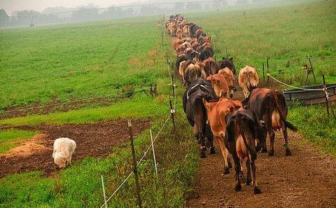 有机农业产量已经接近常规农业