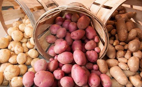 土豆:缓解粮食、污染、干旱危机的灵丹妙药?