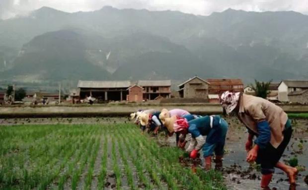 气候变化对粮食安全有正负两种影响