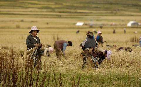 气候变化对农业产出影响有限