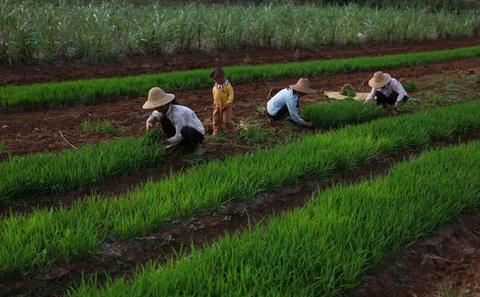中国的农村 — 现在与未来