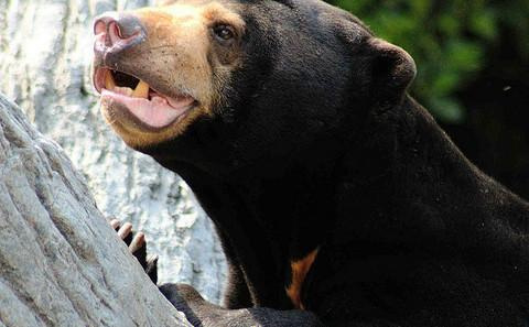 """中国欲修改野生动物保护法原法被责为""""野生动物利用法"""""""