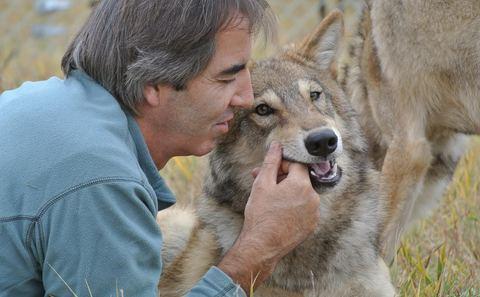 《狼图腾》驯狼师担忧动物明星福祉