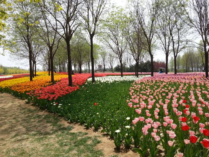 北京也有这么好的鲜花公园