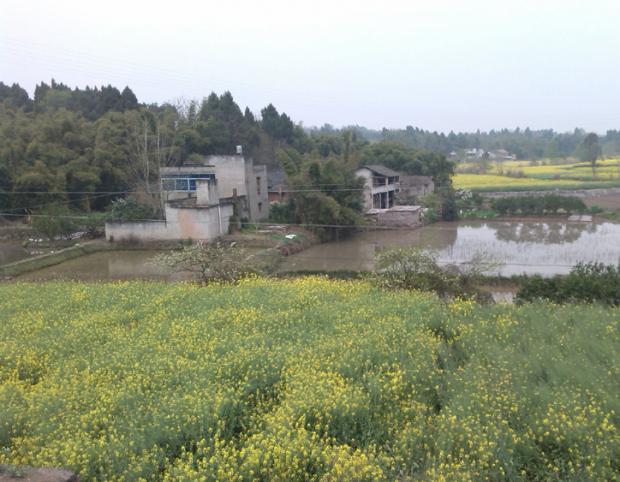 一个全面生态种植的村庄