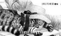 世间的猫都是旅人,这是怎样的心情