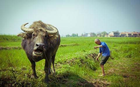 生态文明:绿色中国梦(2)