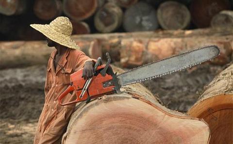 全球遏制非法采伐进度放缓 中国难辞其咎