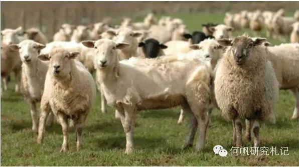 【欧美经济史读书笔记】英国的羊毛业何以能后来居上?