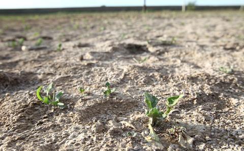 贸然实施大规模土壤治理可能沦为投资游戏