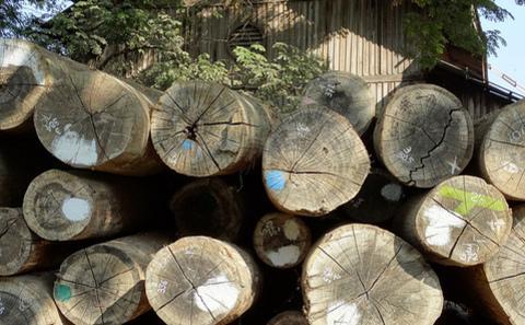 打击中缅非法木材贸易的契机正在当下