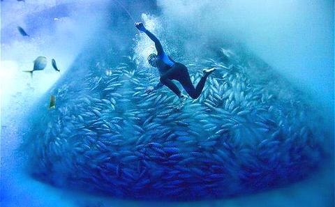 拯救海洋:关键在于治理