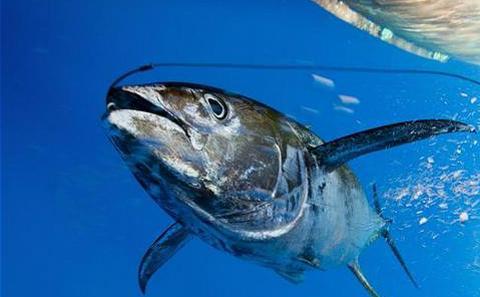 非法捕捞需要全球共同应对
