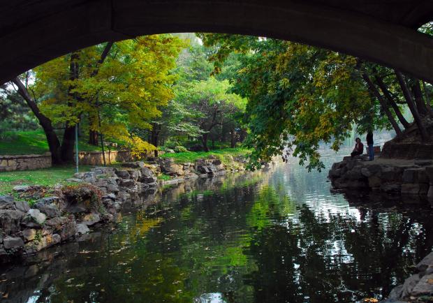 颐和园的残荷:最后的灿烂