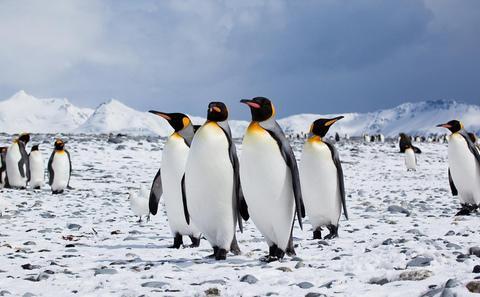 """建立南极海洋保护区是""""圈地运动""""吗?"""