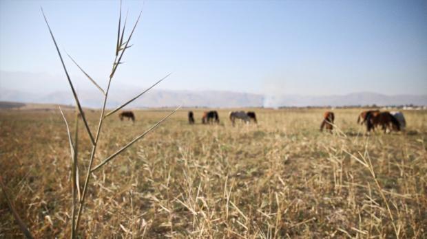 哈国探行记:马背上诞生 能源中腾飞