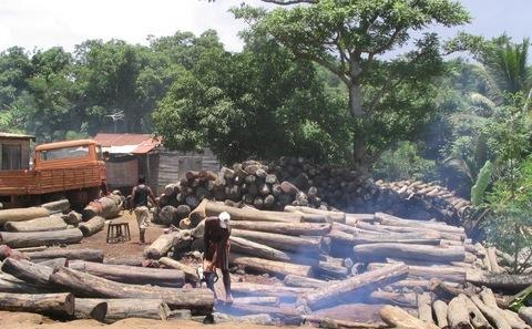 发达国家在巴黎会后应提供资金应对森林采伐