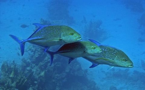 保护海洋为何重要