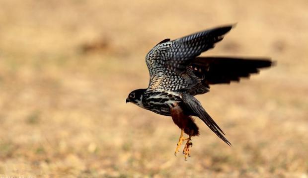 卖鸟获重刑 法律不是抽离人性的纯理性工具