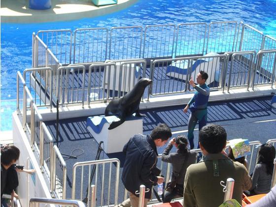中国热衷圈养鲸豚用于表演