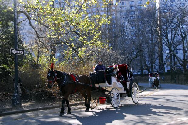 美国东部印象(2):纽约中央公园