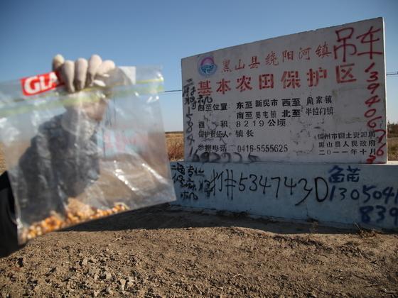 中国发现大面积非法转基因玉米