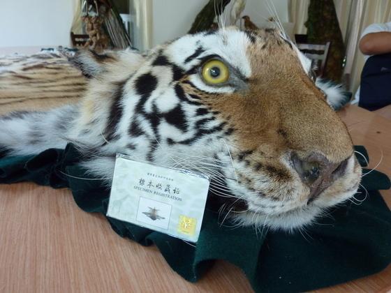 《野生动物保护法》不能背离生态文明大趋势