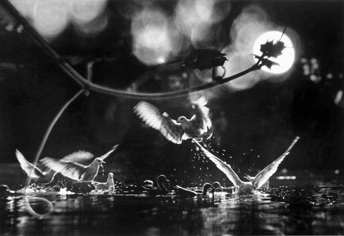 张五常摄影作品连载(第12期):沙龙的日子(之十二)