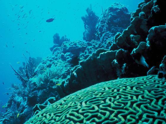 """古""""死海""""对人类不久的将来发出严重警告"""