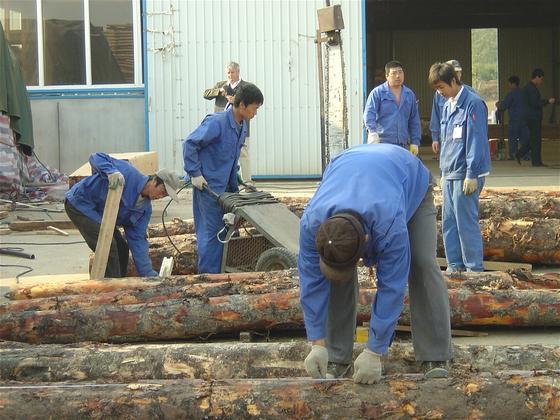 中国采伐限令或将殃及他国