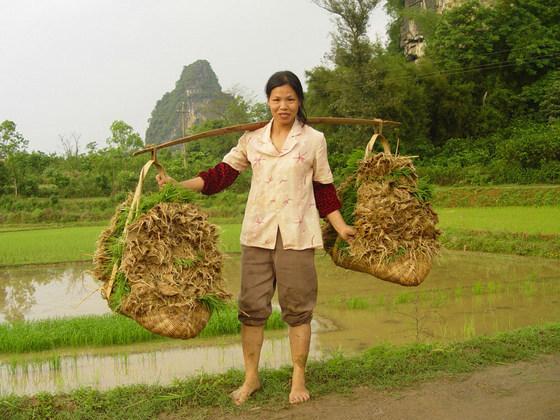 培育中国可再生农业的萌芽