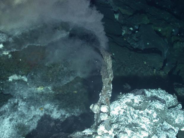 深海绳结—联合国公海生物多样性谈判观察之一