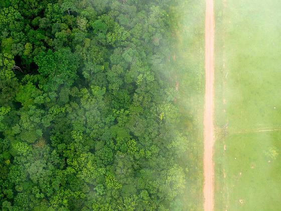 中国对可持续大豆的喜爱或有助于遏制森林采伐